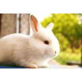Для продажи кроликов