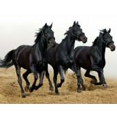 Для продажи лошадей